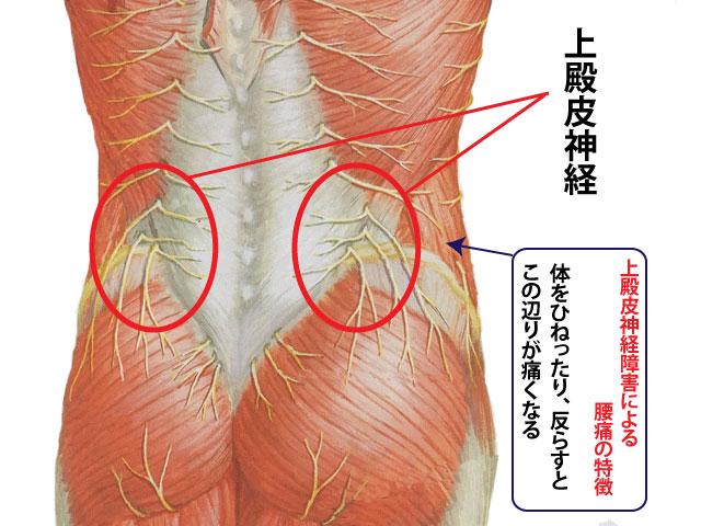 「殿皮神経障害」の画像検索結果