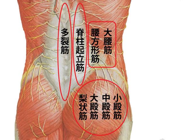 レントゲン異常なし腰痛と鍼灸治療