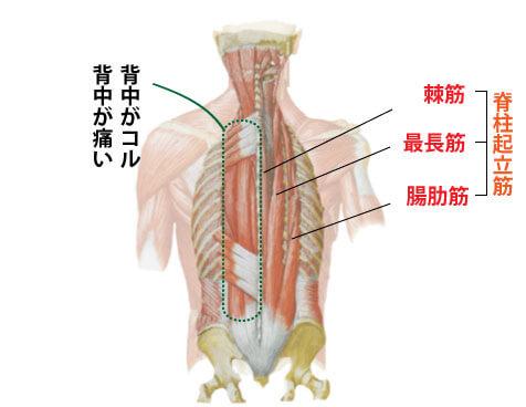 脊柱起立筋と鍼灸治療