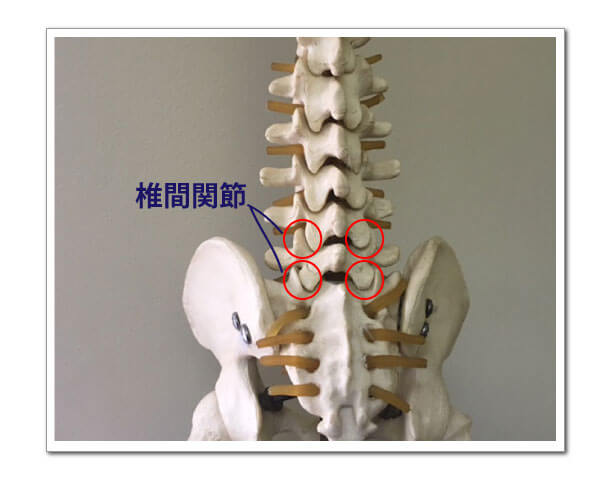 椎間関節型腰痛の鍼灸治療