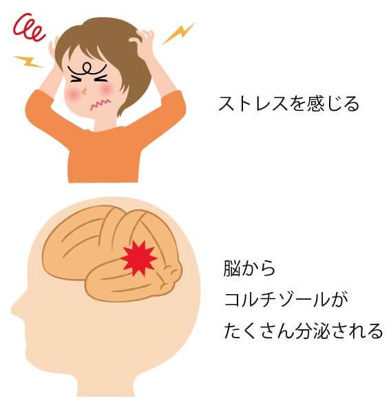 ストレス ホルモン